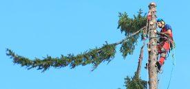 albero fune home